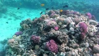 Makadi Bay (Rotes Meer - Red Sea) Ägypten 08/2012 (Unterwasseraufnahmen gefilmt mit Sony HX5V)