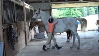 How to Mount a Horse Bareback