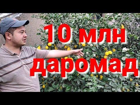 Лимонария бизнес Бу бола 10 млн пул тапади
