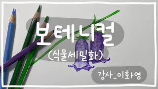 보테니컬 아트_금강초롱꽃