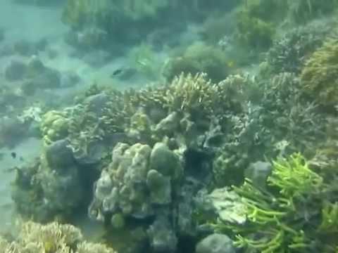 BUNDER: snorkeling area in Bangsring Underwater Mp3