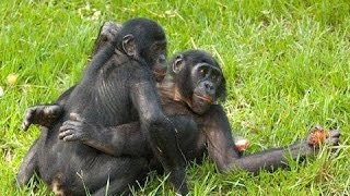 Animals Mating Compilation 2016 - Funny Animals - Animals Breeding , Funny Videos