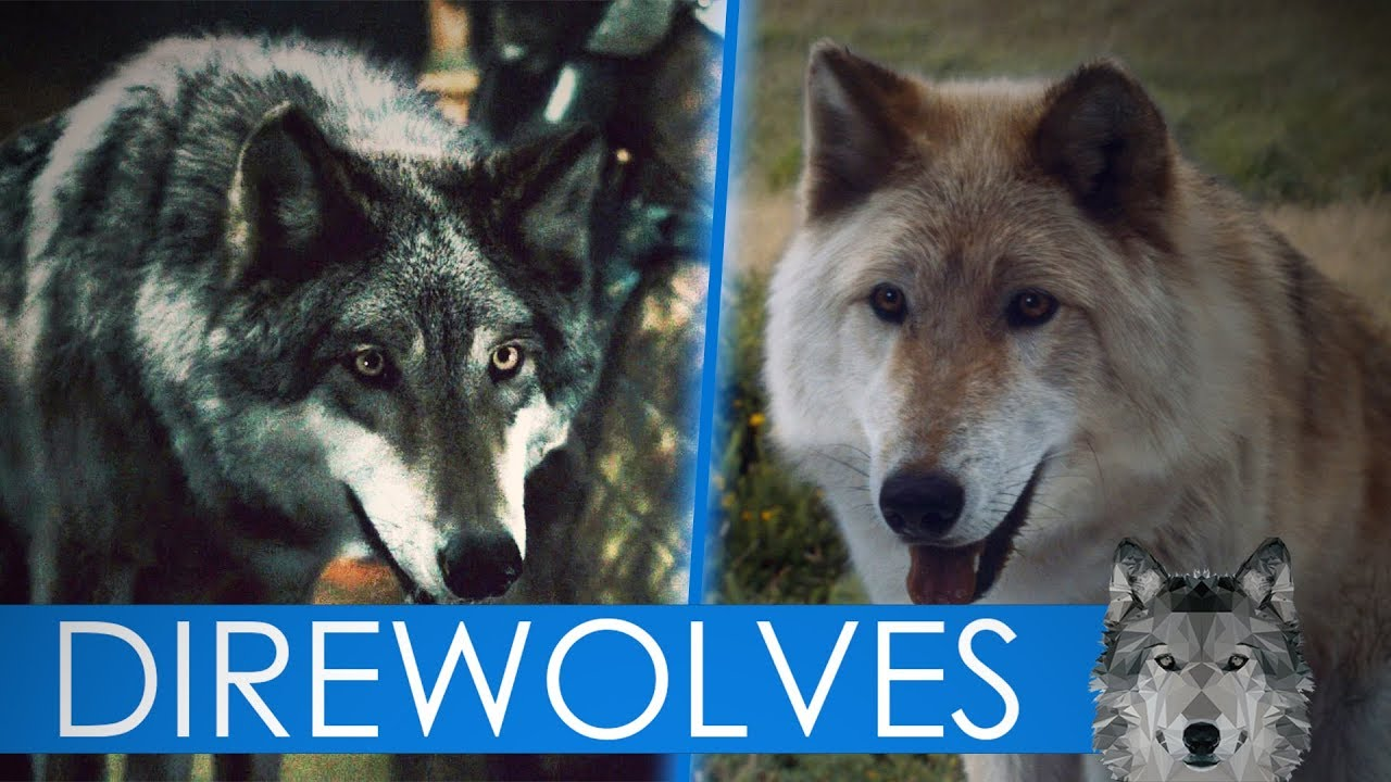 Schattenwolf Got