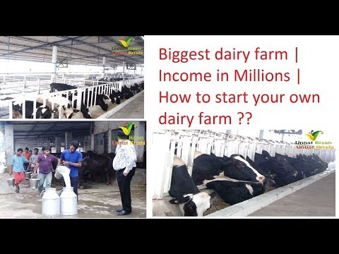 Biggest dairy farm of Punjab | 400+ cows & buffaloes | Income in millions | How to start Your own ??