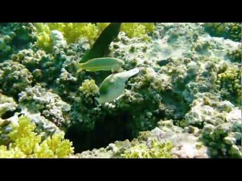 Das Korallenriff im Roten Meer bei Sinai - März 2010из YouTube · Длительность: 6 мин11 с