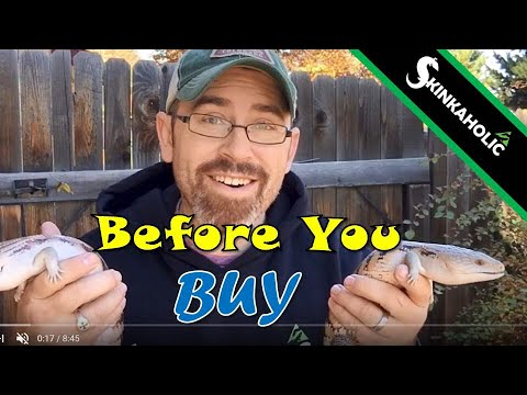 Before You Buy A Blue Tongue Skink - Ep. 63