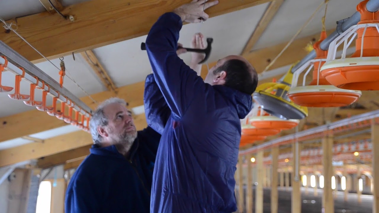 installation of greengage alis led lighting system in a poultry barn