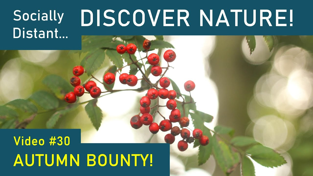 Autumn Bounty aka Food for Wildlife - Discover Nature #30