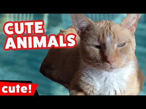 Funniest Cute Pet & Animal Bloopers, Outtakes & Clips 2016 Weekly Compilation | Kyoot Animals