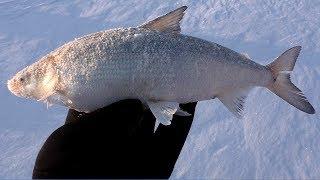 РЫБАЛКА НА ХАПУГУ ХЛОПОК отчёт с рыбалки на Амуре Март 2020 Рыбалка с fishermandv27rus