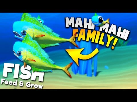 UNLOCKING NEW MAHI MAHI AND STARTING A MAHI MAHI FAMILY! | Feed And Grow Fish SURVIVAL Gameplay