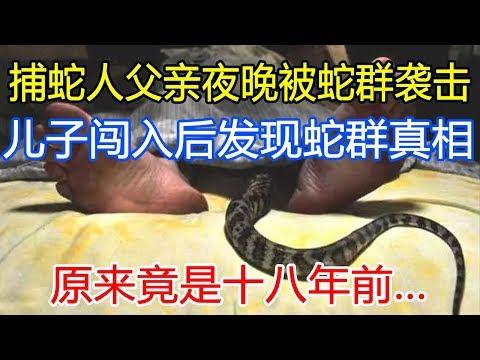 捕蛇人父亲夜晚被蛇群袭击,儿子闯入后发现蛇群真相,原来竟是十八年前