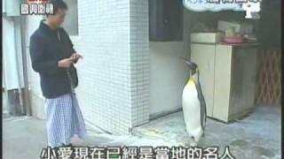 我的國王我的企鵝 QQ Penguin