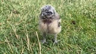 Bird Show BTS: Meet Harriet!