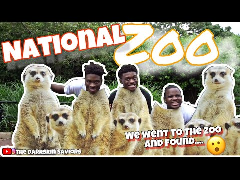WE HAD THE LARGEST ROAST SESSION WHILE AT THE ZOO😂😂  NATIONAL ZOO VLOG