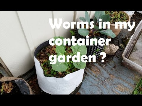 Should I Add Worms To My Container Garden Straight To The Point