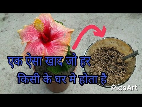 How To Use Tea Leaves In Your Gardenhow To Ready Acidic Soil For