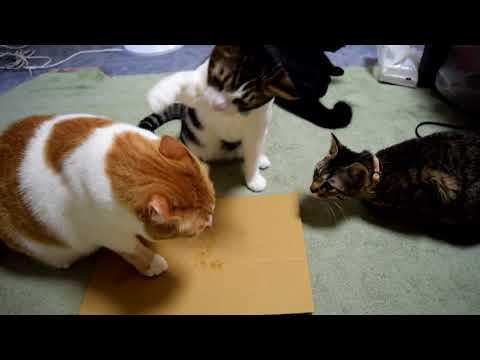 猫にまたたびの粉をあげたら乱闘が始まった。