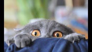 Провинившиеся коты смешная подборка