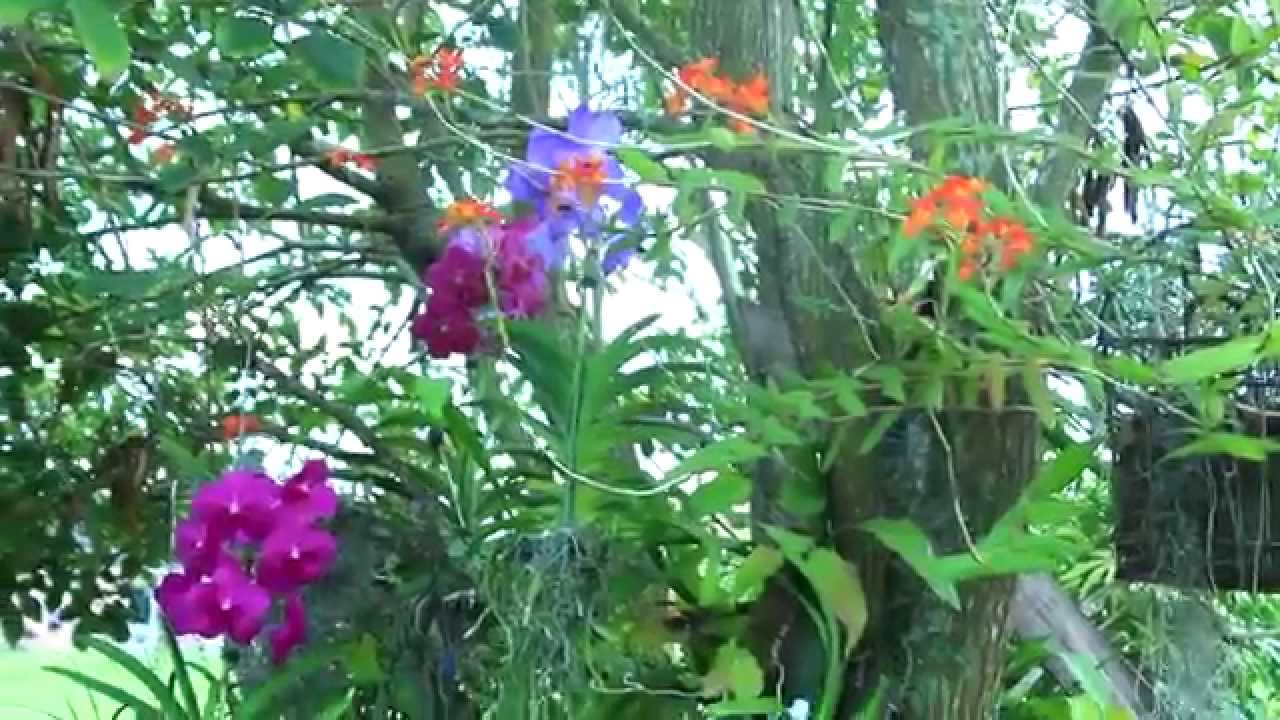 DECORATING WITH ORCHIDS & AIRPLANTS - YouTube