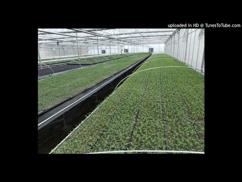 Agriculture, Horticulture, Vegetable Grafting, China, Pakistan