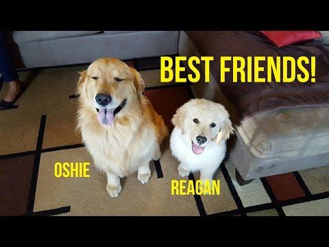 HAPPY GOLDEN RETRIEVER BFFs | Oshies World