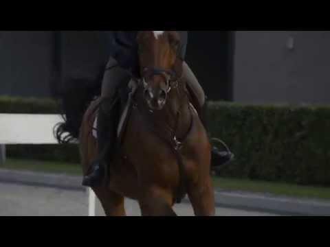 Horse Sports Services Netherlands | www.hssn.nl