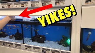 HE REMOVED DEAD FISH FROM PETCO AQUARIUM