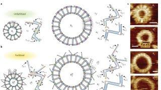 Grey Goo is Here, New Self Replicating DNA Computers Blow the Doors Off Quantum Computers