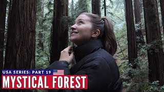 World's Tallest Trees - Muir Woods California | San Francisco VANLIFE | Brits in America Part 19