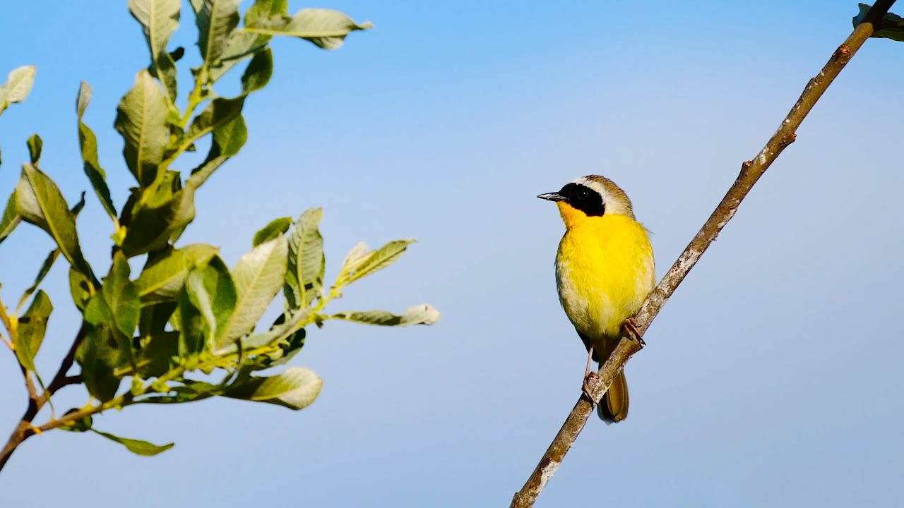 7HRS of Spring Songbirds in 4K | Beautiful Bird Scenes & Sounds for Relaxation, Study, Sleep UHD