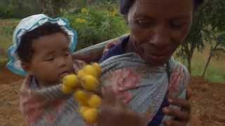 Sécurité alimentaire et changement climatique