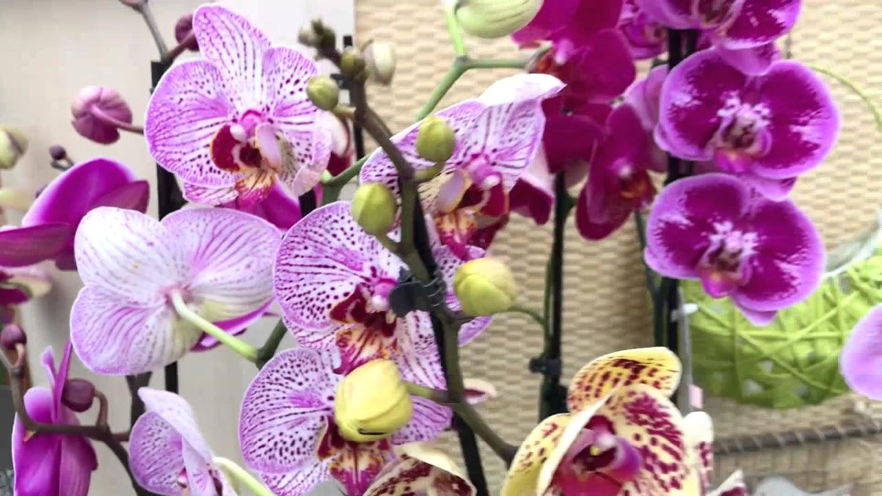 Тепличка для орхидеи своими руками фото 125