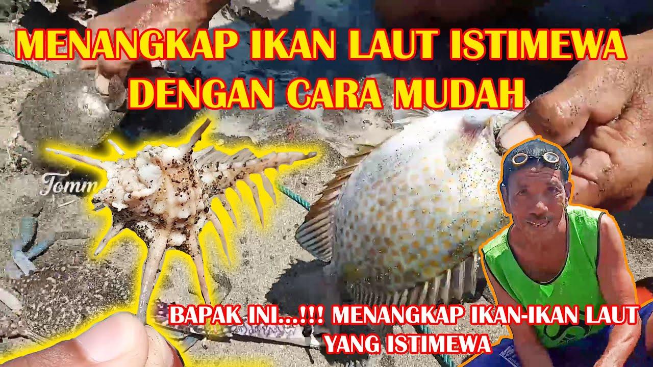 Bapak ini Menangkap Ikan Laut Istimewa, dengan cara mudah