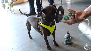 Upstate NY fire dept. gets special oxygen masks for dogs, cats, birds, ferrets