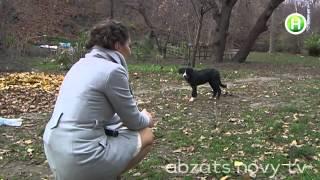 Что делать, если в вашем дворе живет стая бездомных собак? - Абзац! - 11.11.2013