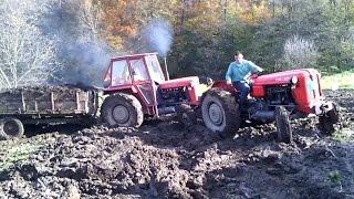 IMT 558 izvlacenje stajnjaka kroz blato - IMT 558 pulling manure through mud