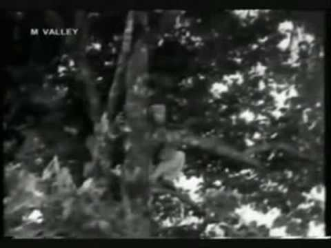 Ali Baba Bujang Lapok( lagu penyamun)