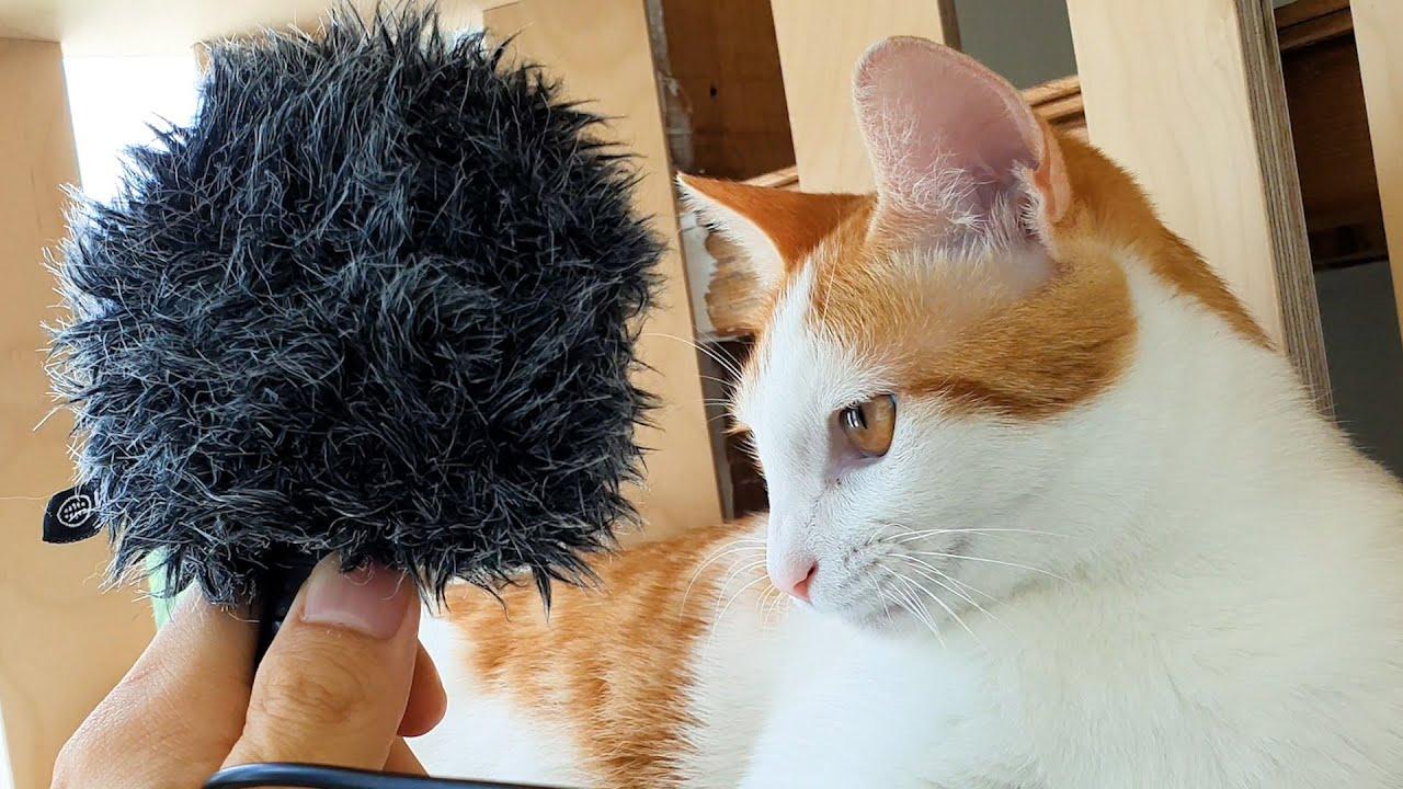 *고막주의* 골골대는 개냥이 목에 마이크를 대보았다 |  Amplified Cat's Purr Complication
