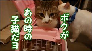 かわいい子猫が突然お家にやってきた-その時、先住猫達は・・・?!の、あの子猫は今?その後スペシャル10