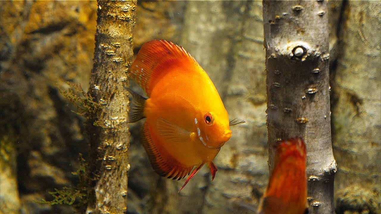 how-to-start-an-aquarium-in-8-ways