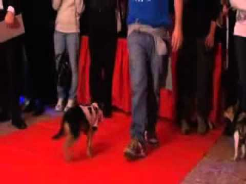 Vip Dog Fashion Show 1° parte