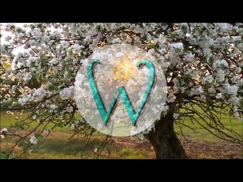 Summer 2017 - Wish and Whim Jewelry - Commercial