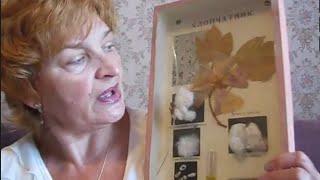 видео Виды хлопчатобумажных тканей
