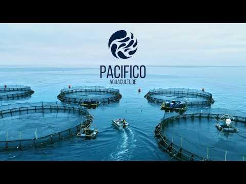 Innovators Of Modern Ocean Farming - Pacifico Aquaculture