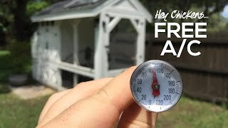 How to Keep Chickens Cool in the Summer