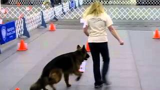 2013 Akc Rally Obedience Nationals Round 1 Advance German Shepherd Dog