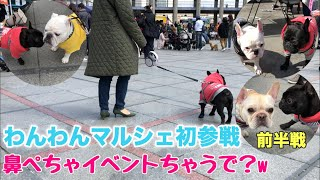 フレブル子犬タプさん生後344日目♪ YouTube動画友達から神戸で犬のフリ...
