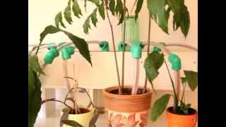 Cheap and practical DIY self-watering system for plants (video)