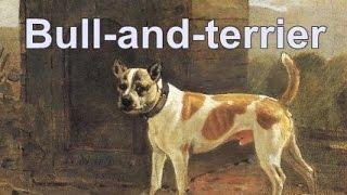 Origem do Pit Bull - parte 2 - Bull and terrier
